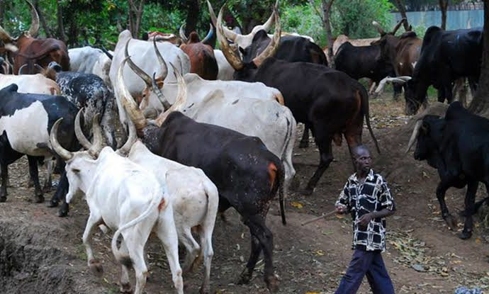 Afenifere can't order herdsmen out of South West – Miyetti Allah warns