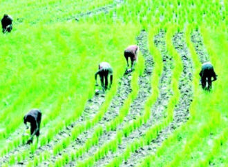 Farmers more sexually active than other professionals —Study
