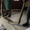 Panic as sex worker brings python into court