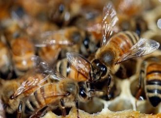 Bees sting players, officials, disrupt football match in Tanzania