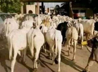 Coronavirus: Miyetti Allah to herders: Close markets, return to bush