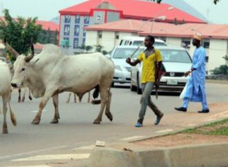 54,000 beef consumed in Benin sourced outside — Cattle dealers tell 'anti open grazing law' advocates