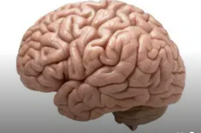 Israeli scientists discover way to block spread of brain cancer